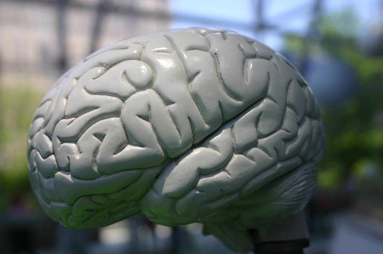 Come sopravvivere alla morte cerebrale
