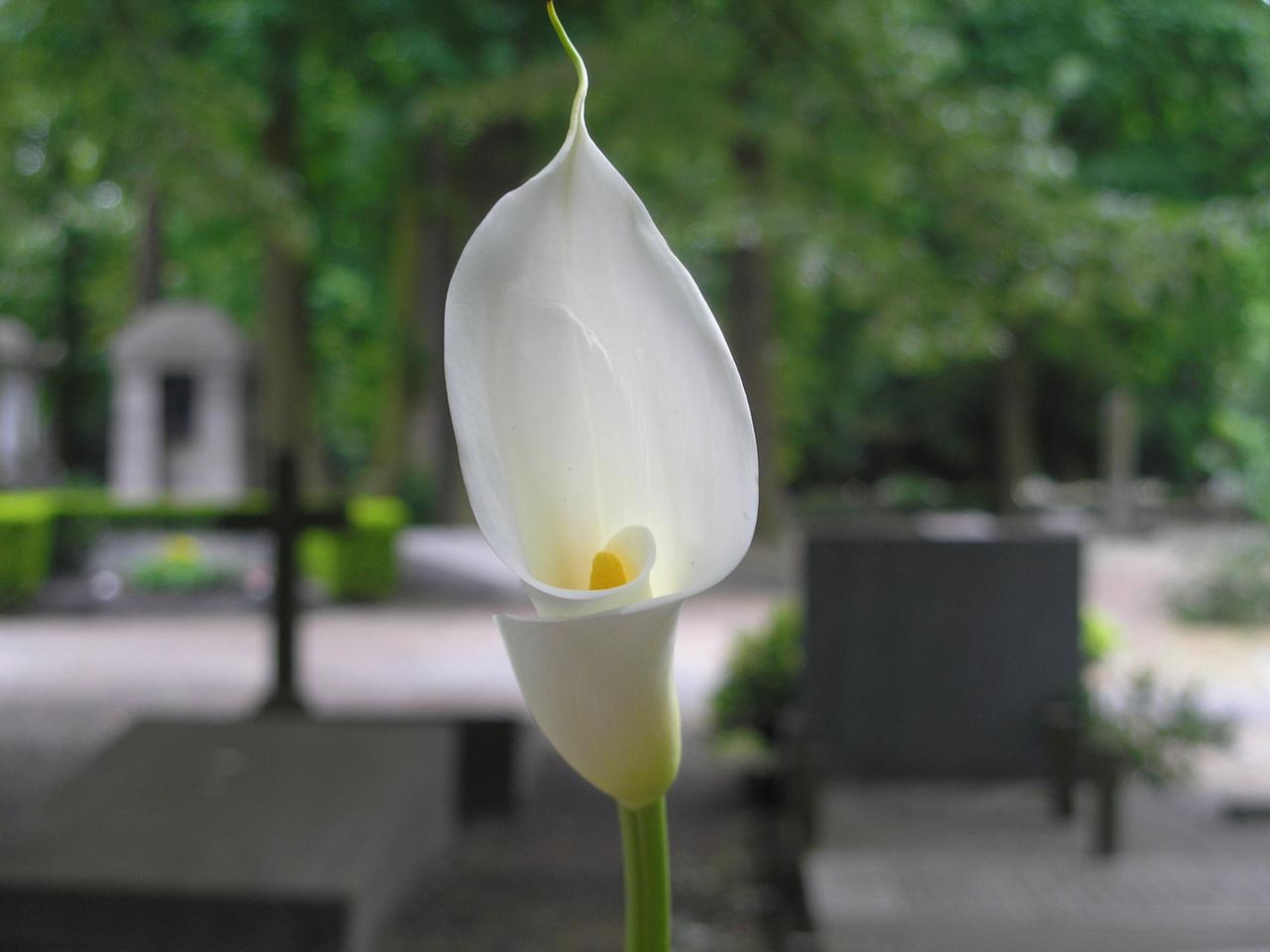 Prezzi funerali low cost con cremazione Canegrate