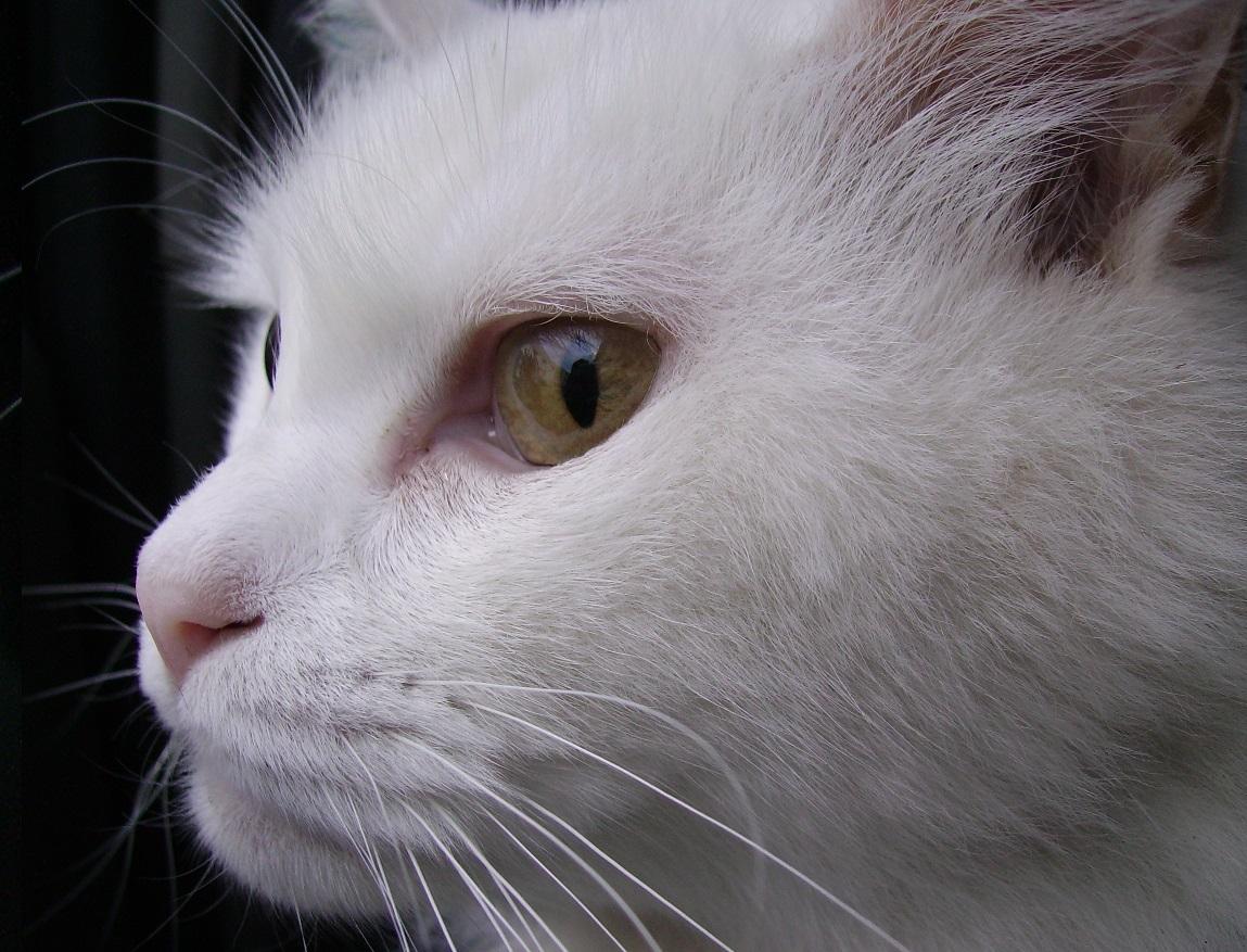 Pensionata teneva un gatto morto nel frigo