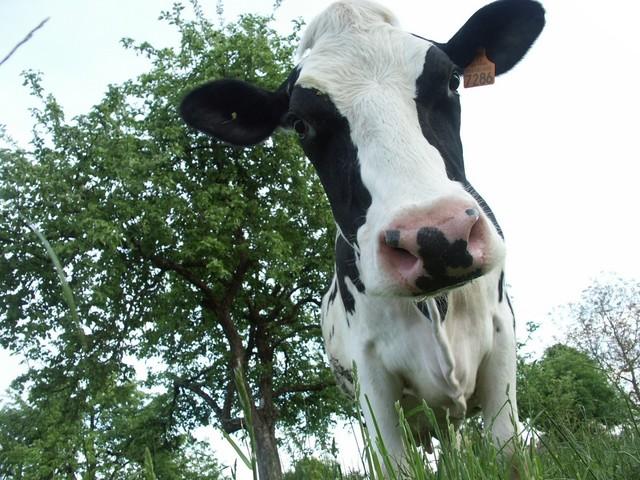 Torino, sospetta morte per mucca pazza alle Molinette