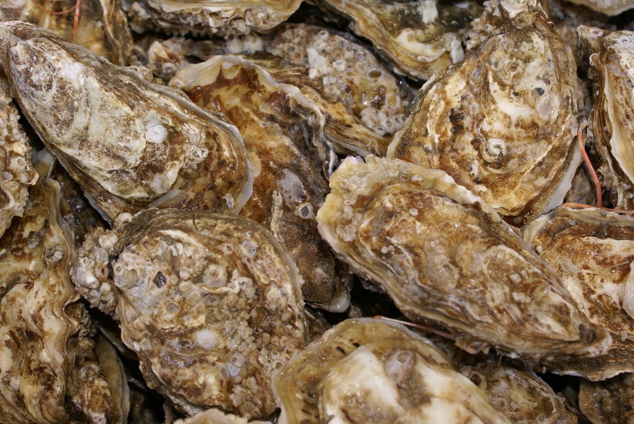 Le ostriche crude portano gastroenteriti acute