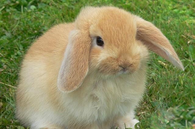 Proposta di legge tutela del coniglio