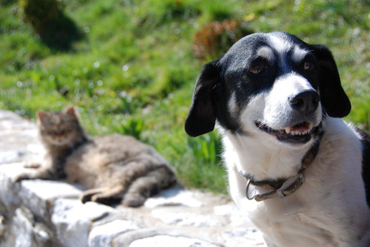 Animali nei cimiteri o nei giardini: ecco dove, in caso di morte, cani e gatti potranno essere seppelliti