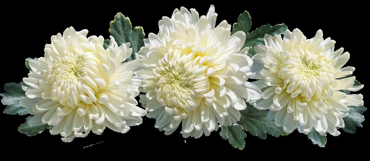 Che fiori portare al cimitero? Quale tipologia floreale è più indicata per una tomba?