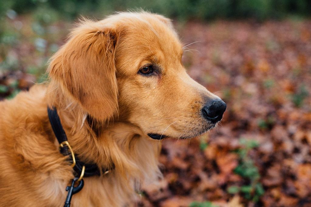 Monza: gli animali d'affezione potranno entrare nel cimitero cittadino