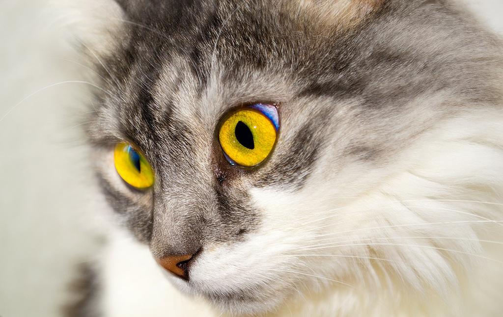 Quanto costa la cremazione per il proprio gatto? Le cifre oscillano tra poco meno di 100 e 300 euro