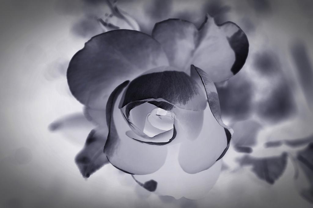 Quanto costa un funerale a Cinisello Balsamo? Serve un preventivo per un funerale (con cremazione o inumazione o tumulazione)? Come organizzare il servizio? La risposta è sempre OdF – Outlet del Funerale